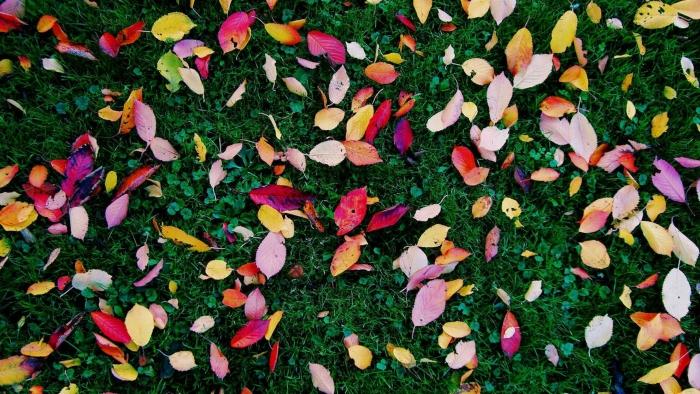 Het bladruimen gaat binnenkort weer beginnen!